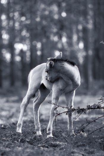 Foal on field