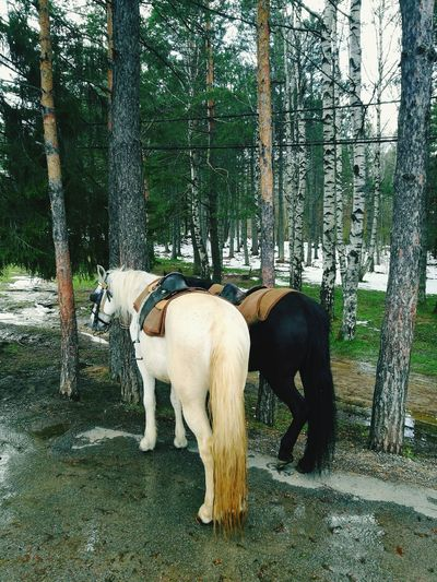 Mountain Horses Animal Themes Animal Wildlife No People Animals In The Wild Outdoors Domestic Animals Young Animal Full Length Day Nature Tree