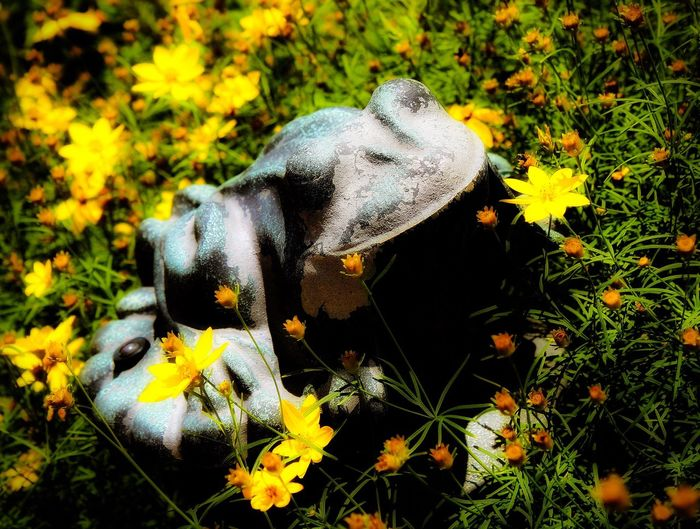 Ribbit! 🐸 🌼🌞 Animal Themes Frog Sun Warmthandsunshine Flower Yellow Nature Beauty In Nature Close-up Outdoors Afternoon High Angle View Growth Plant Taking Photos Relaxing Wandering Around Aimlessly Textures And Surfaces Walking Around