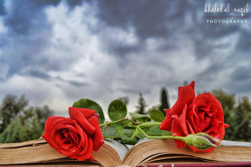 Flower Flowers Flower Book Book Books ♥ Sweet Beautiful Pacture(: