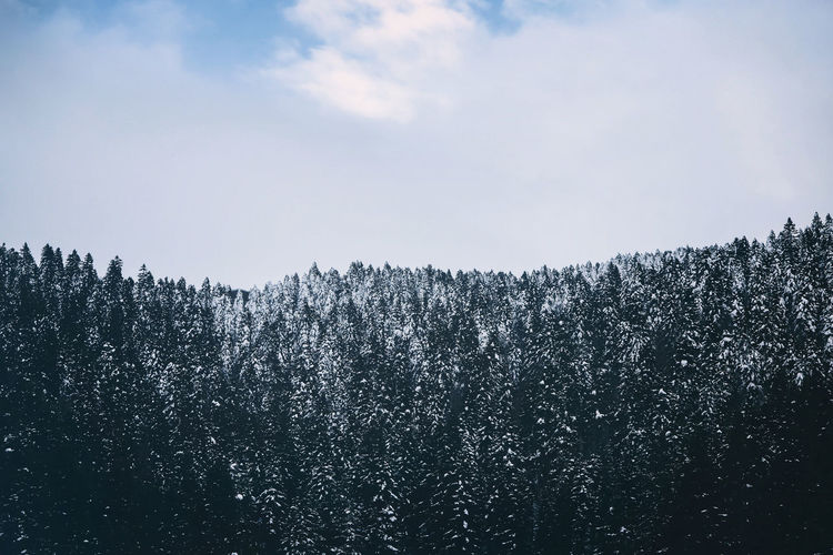 Trees against sky during winter