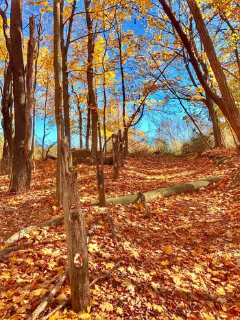 BlydenburghPark-NatureTrail Tree Autumn Nature Beauty In Nature Tranquility Change Outdoors Scenics Sunlight Forest Day No People Tranquil Scene Sky Tree Trunk Leaf Landscape Growth Smithtown, Ny Nature Path Long Island, Ny Fence Post Beauty In Nature