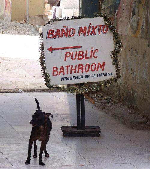 """""""Baño Mixto"""" Baño  Cuba Cuban Dog Havana Information Sign La Habana No People Outdoors Public Washroom Restroom Sign Summer Toilet"""