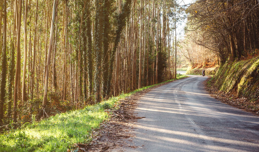 Forest road landscape in autumn with couple riding a motorbike in the background Autumn Couple Driver Green Horizontal Motorcycle Motorcyclist Nature Road Tree Trip Adventure Background Bike Destination Direction Fall Fast Forest Motorbike Ride Season  Senior Steering Two People