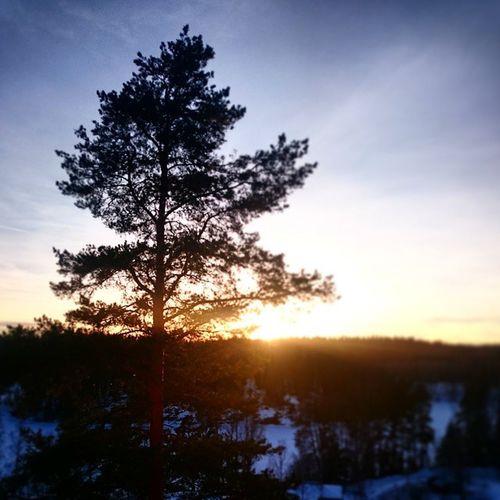 Sunset - Nuuksio - Haltia 🌱🌇 Sunset Tree Nature Forest Wood Black Nuuksio National Park Haltia Finland Thisisfinland