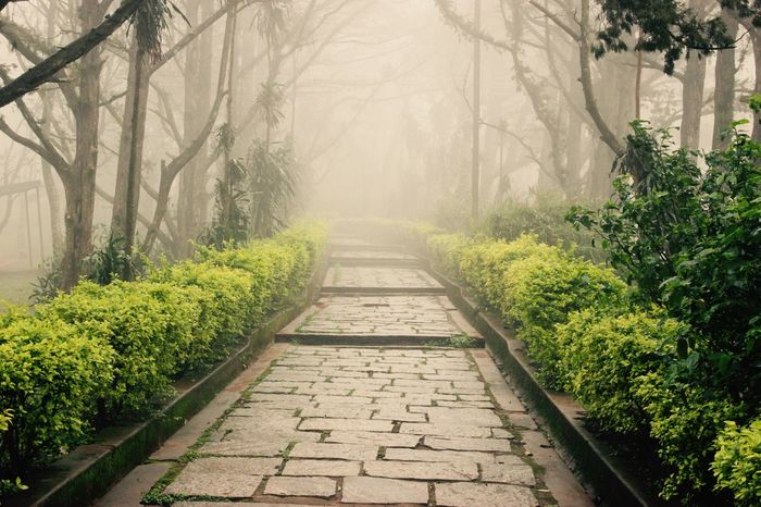 Bare Tree Beauty In Nature Branch Day Fog Footpath Fun Green Green Pathways Greenery Nandihills Nature No People Orchid Outdoors Plant Scenics The Way Forward Tipusultan Tree Walking Around Weather Weekend Getaway