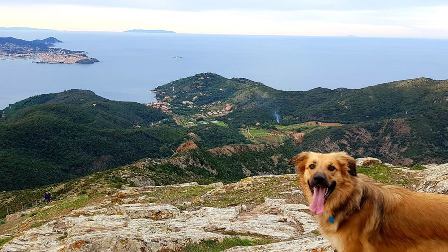 Panorama with laughing dog Panoramic Photography Seascape Panoramic View Tirrenic Sea Tranquil Scene Calm Sea Elba Island  Castle View  Sea And Sky Nature Vacations Pets Water Portrait Sticking Out Tongue Sky Animal Tongue Horizon Over Water Calm Coast Sea Canine