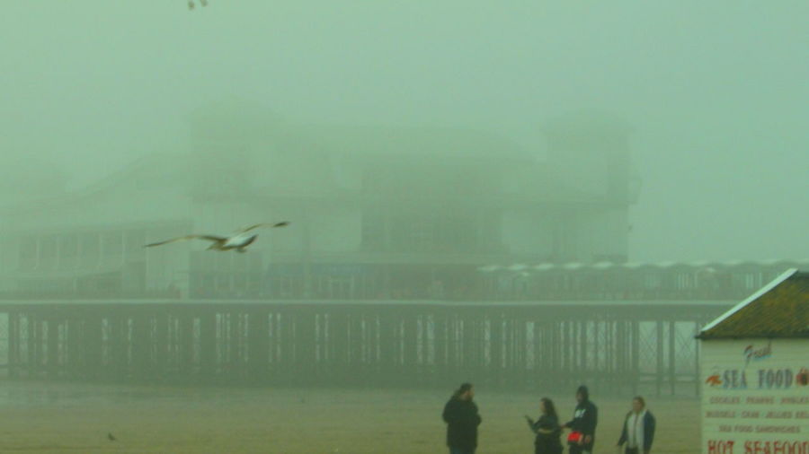 Seagull People 2018 April April 2018 Mist Water Bird Flying City Sea Sky Architecture Building Exterior Built Structure Horizon Over Water Foggy Shore Seascape