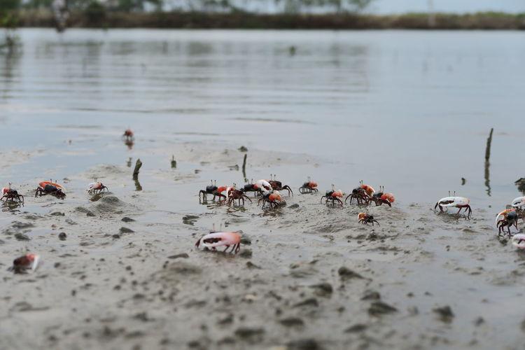 Group of birds on beach