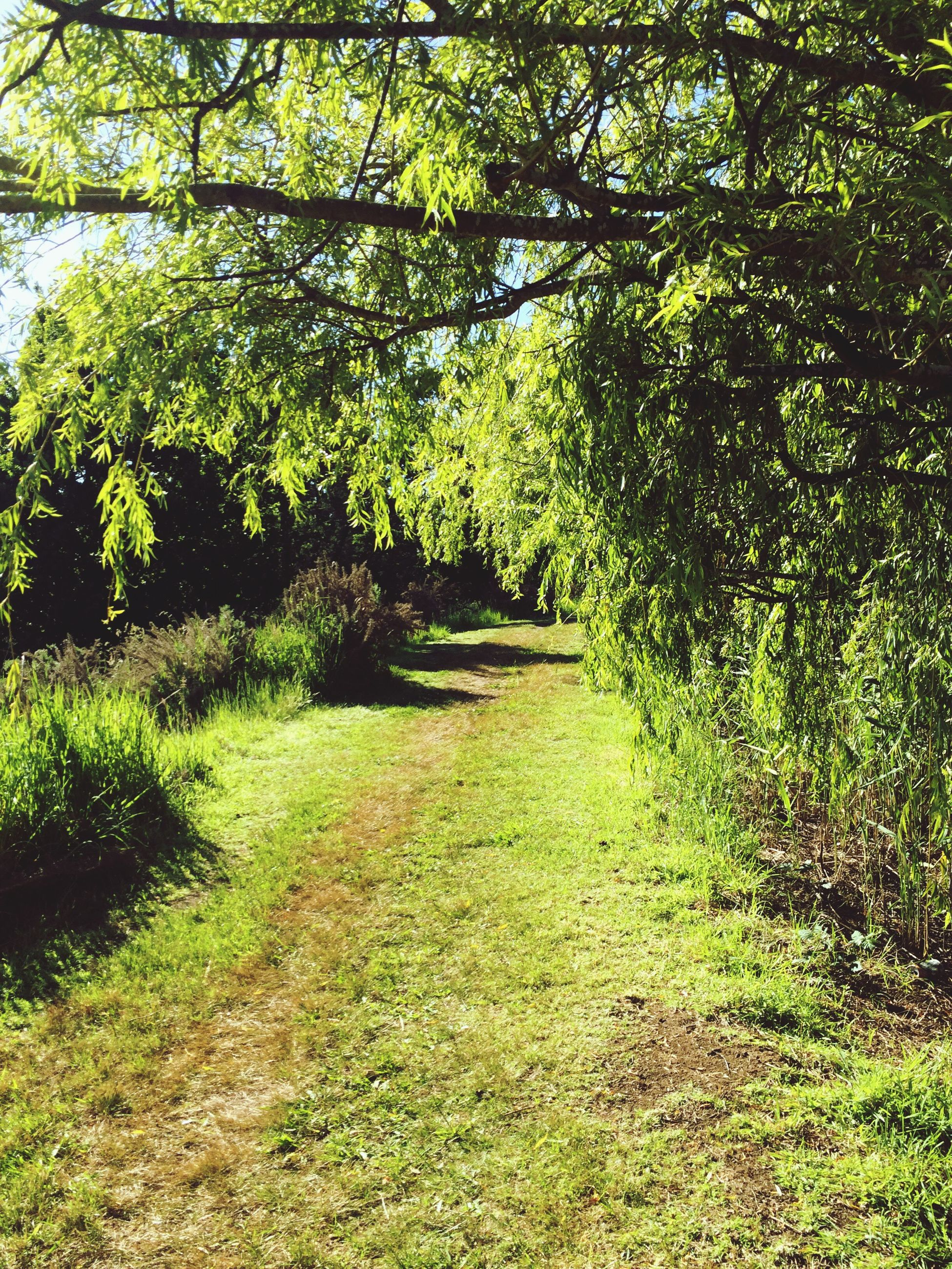 tree, nature, growth, green color, outdoors, no people, day, beauty in nature, scenics, backgrounds