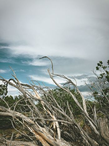 """""""Deadwood Sky"""" Dead and dry Juniper tree clings to the New Mexico sky. Dead Tree Deadwood  Juniper Junipertree NewMexicoTRUE Newmexico Newmexicophotography Newmexicoskies Clouds Clouds And Sky"""