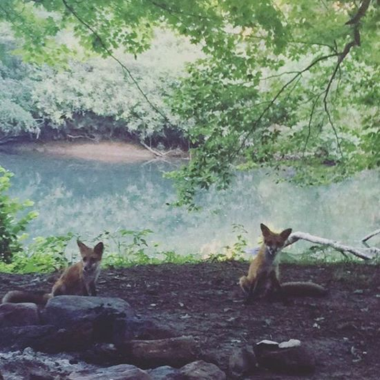 Live For The Story The Great Outdoors - 2017 EyeEm Awards Wild&wonderful Foxbabies Awareness