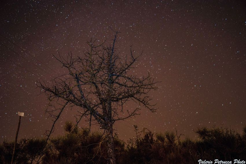 The night Night Space Star - Space Tree Plant Astronomy Sky Scenics - Nature Beauty In Nature Nature Star Space And Astronomy Outdoors