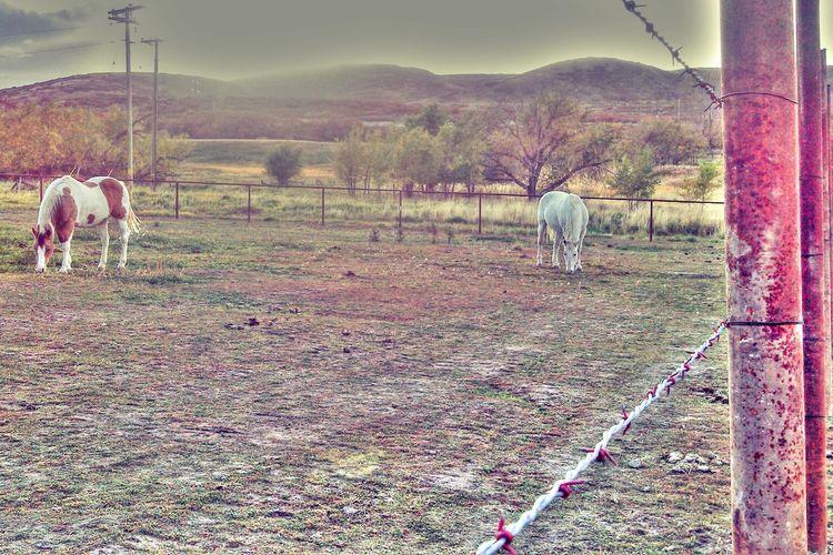 Horses. EyeEm Nature Lover EyeEm Best Shots EyeEm Best Edits Eye Em Hungover