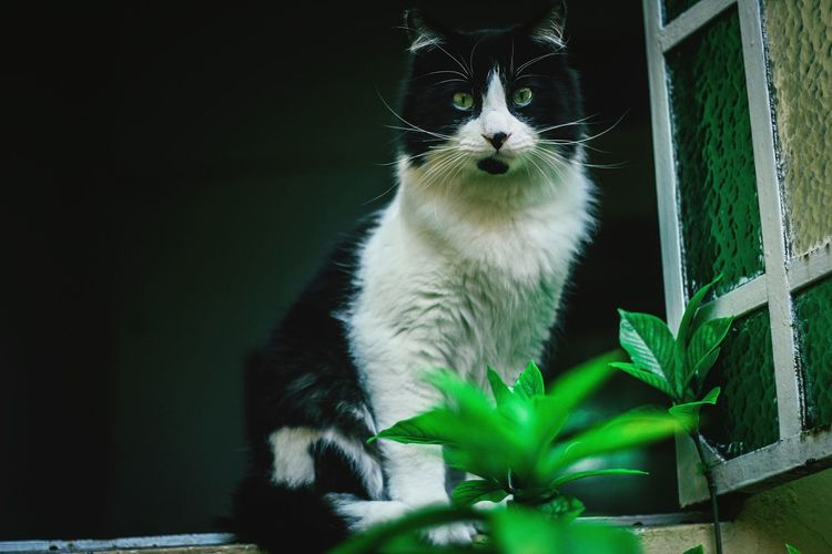 Close-up of cat by plants