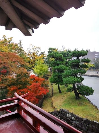 Autumn Garden Chic Elegance In Nature Exquisite Japan Exquisite Beauty Autumn In Japan 紅葉 View From Above Japanese Garden Red Maple Red And Green 松本城 Japan Japanese Castle Autumn Leaves Japanese Autumn Trees In Different Colours Tree Nature Beauty In Nature Outdoors No People Day Water Mountain Sky
