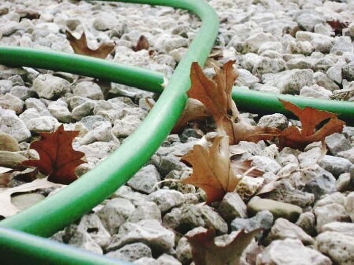 Summer ends Waterhose Dry Leaves Gravel