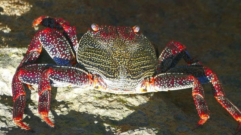 Spotted Red Animal Themes Shiny Close-up Outdoors Sea Life One Animal Animals In The Wild Animal Wildlife Crab
