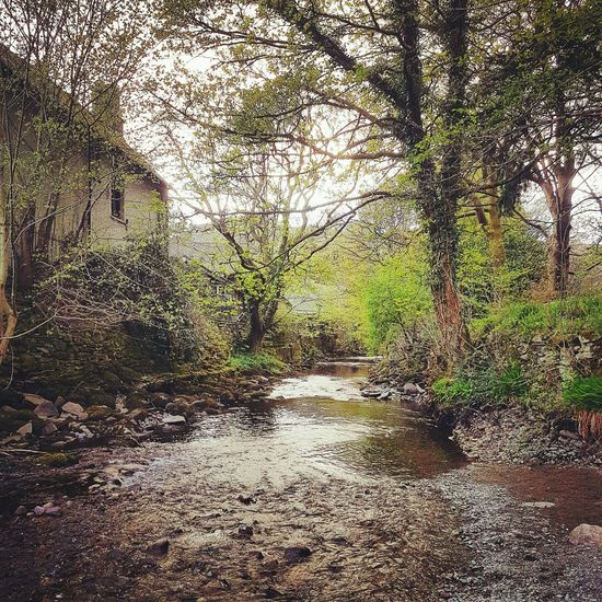 Riverbanks Outdoors Nature Water Rural Scene Outdoor Photography Landscape Springtime Lake District Grasmere River Banks Landscape Nature Leaves New Growth