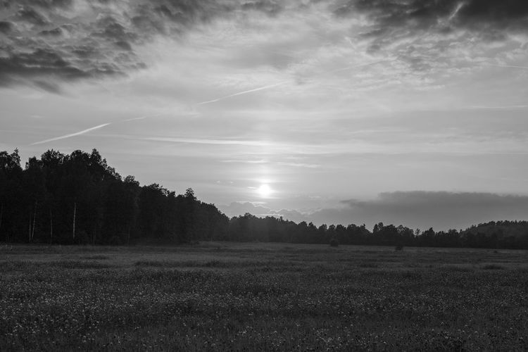 Scenic view of meadow against sky during sunset Cloud - Sky Sky Landscape Field Environment Tranquil Scene Land Scenics - Nature Beauty In Nature Black And White Monochrome Västra Götaland Tranquility Plant No People Non-urban Scene Nature Tree Rural Scene Day Outdoors Grass Idyllic Agriculture Meadow Growth Cloudscape Weather Season