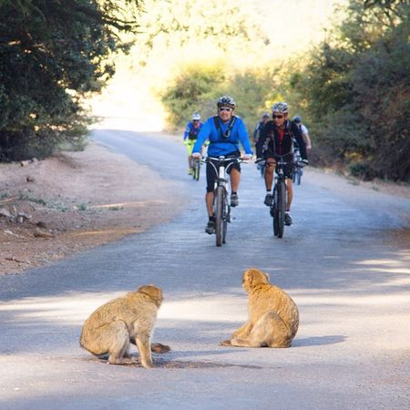 Bicycle Atlas Atlas Mountain Bicicleta De Montaña Bike Macaco Mountain Bike Mountain Biking MTB MTB ADVENTURE Monkey Monkeys Macaca