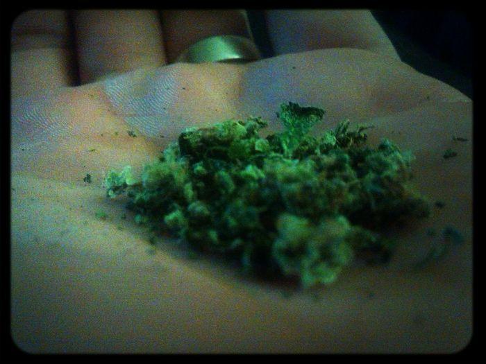 Marihuana Smoking Marijuana MariHuana! ;) Marijuanaplant
