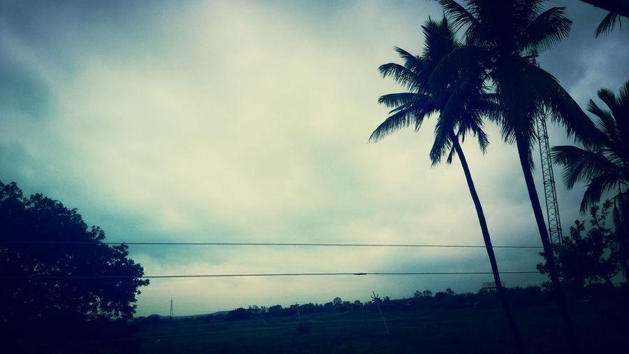 Portrait Coconut Trees Nice Climate Random Click