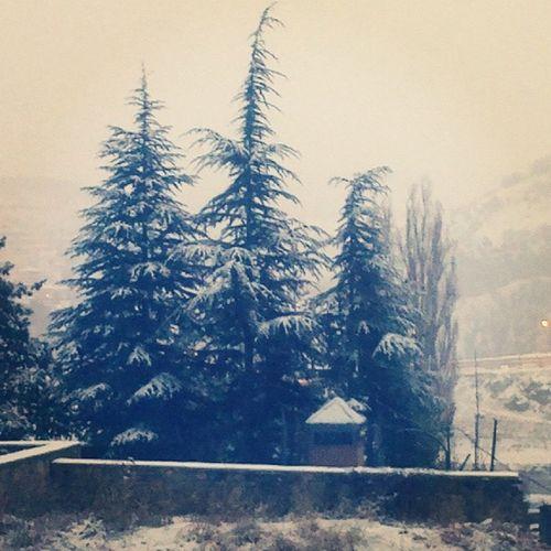 Snow Turkey Tunceli