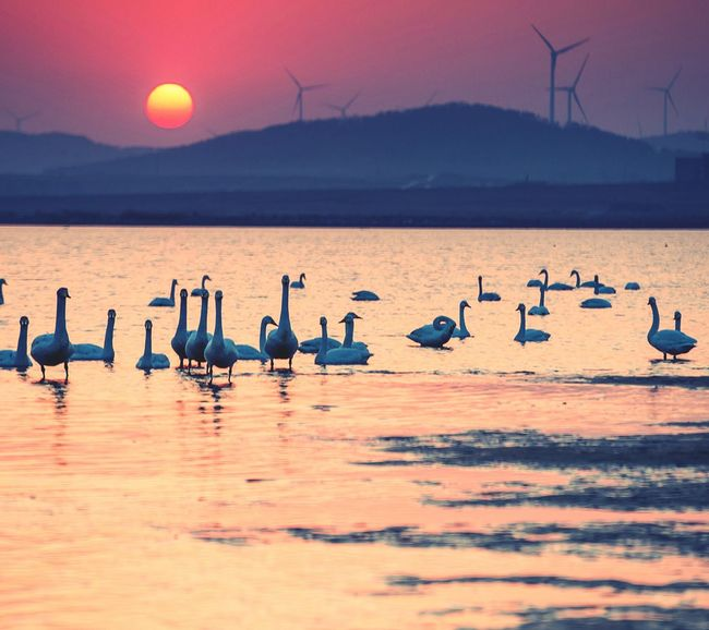 Flamingo Bird Animal Wildlife Sunset Water Sea Reflection Beach Animal Nature Outdoors Colony No People Beauty In Nature Landscape Large Group Of Animals