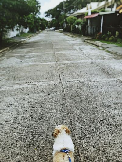 Where are you taking me? Dogwithamission Streetwalk Dogs Of EyeEm Parkmaybe Exercise Time Pokemon Hunting in Parañaque, Philippines