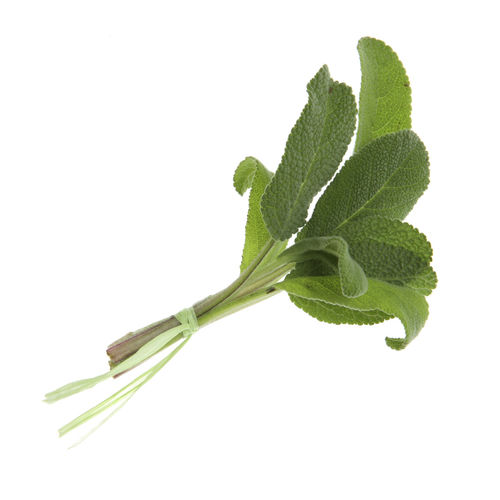 Close-up of leaf against white background