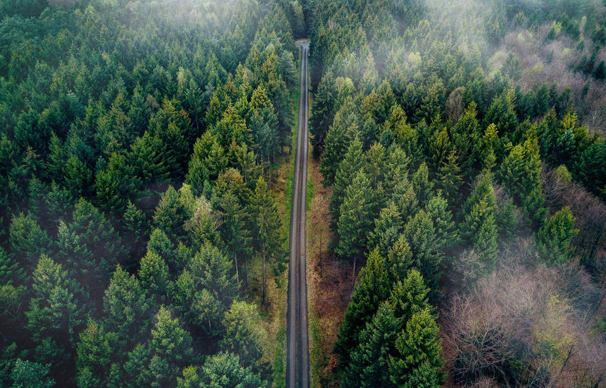 Beauty In Nature Day Forest Freshness Green Color Growth Landscape Lush Foliage Mountain Nature No People Outdoors Pinaceae Pine Tree Plant Rural Scene Scenics Sky Tranquil Scene Travel Destinations Tree Tree Area Wilderness Area WoodLand
