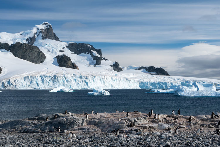 Penguins on rock formation by sea during winter