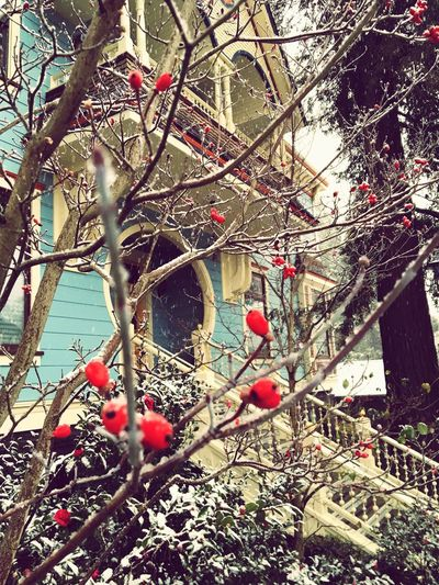 A little bit of Snowy Snow ❄️ Tree Growth Red Branch Snow Snow ❄ Nature Beauty In Nature Outdoors Chilly Close-up Architecture Freshness Water California Love Victorian