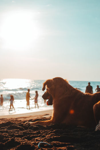 Dog at the sea Beach Sea Animal Water One Animal Fun Sand Nature Horizon Over Water Sky Beauty In Nature Animal Themes Dog Pets Day