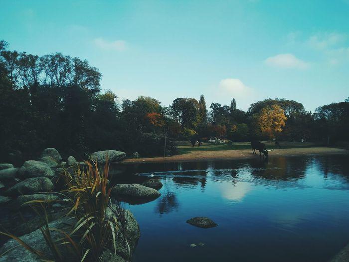 Nature Parc De La Tête D'Or Water Reflection Sky