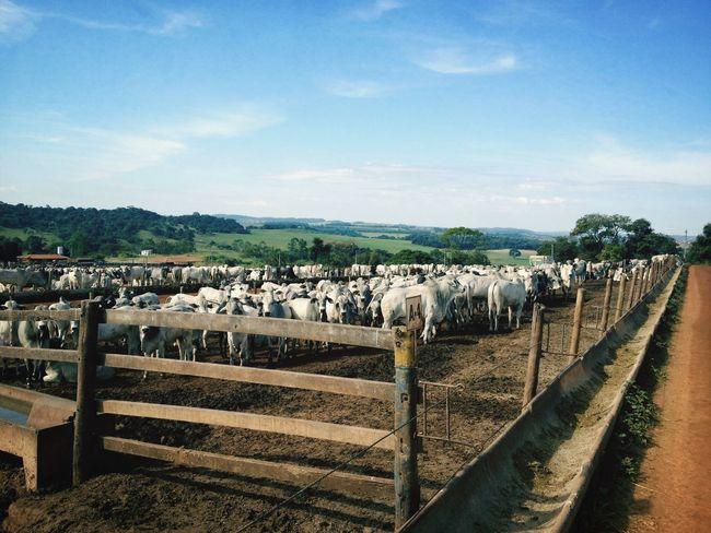 Confinamento Fazenda Mirante