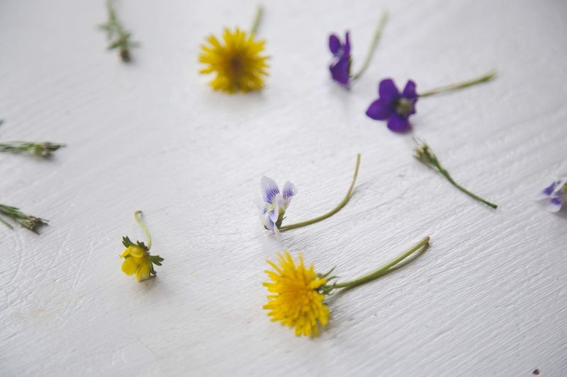 High angle view of flowers on table