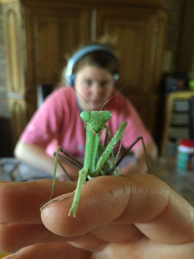 My little friend Child Childhood Girls Sitting Portrait Close-up Insect Praying Mantis
