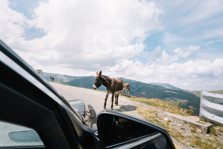 View from car with donkey and mountain