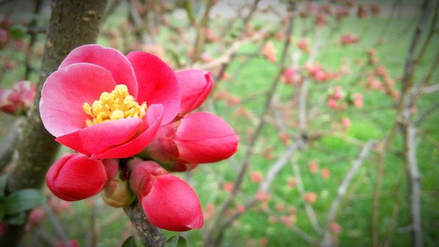 Springtime Spring Flowers Primavera 2016