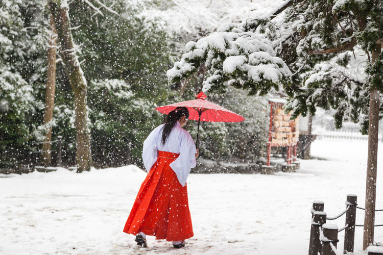 Japanese woman in traditional red cloth walking in the snow Japanese Woman In Traditional Red Cloth Walking In The Snow Red Umbrella Walking In The Snow Asian Umbrella Cold Temperature Day Japonaise En Tenue Traditionnelle Rouge Marchant Dans La Neige, Ombrelle Rouge One Person One Young Woman Only Red Red Japanese Umbrella Red Hakama Red Traditional Japanese Cloth Shrine Garden Under The Snow Snow Snowing Standing Tradition Tree Winter Young Adult