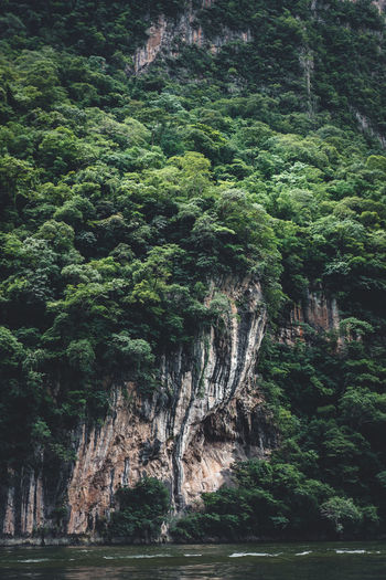 Tree Plant Growth Beauty In Nature Land Nature Forest Scenics - Nature Rock Travel Green Color Tranquility No People Foliage Day Environment Lush Foliage Tranquil Scene Outdoors Tourism Rainforest Formation Eroded