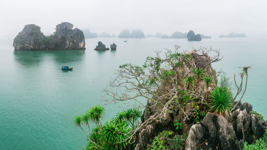 Ha Long Bay Sea Seascape Beauty In Nature Frog Tree Tranquil Scene High Angle View Rock Outdoors Scenics - Nature Tranquility Boat Island