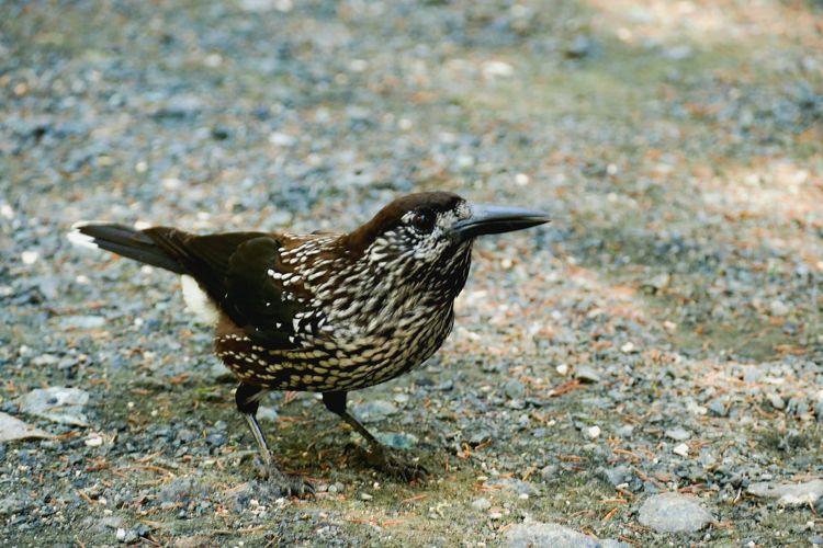 Nature Bird One