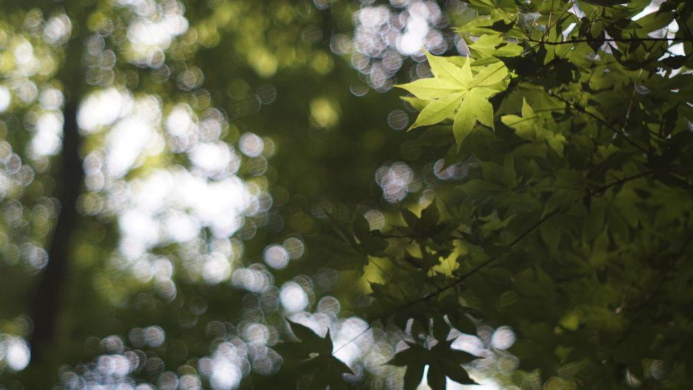 今日は NDフィルター を使って遊んで来ました‼︎ こんなに 玉ボケ が出来るんですね〜(((o(*゚▽゚*)o))) 葉っぱ Nature 紅葉 四季の里