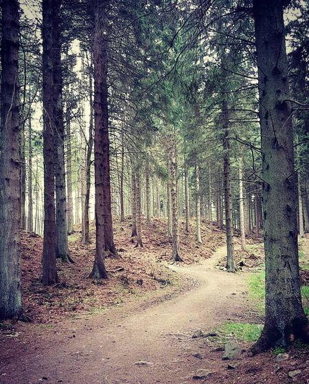 Kirkhill Forest