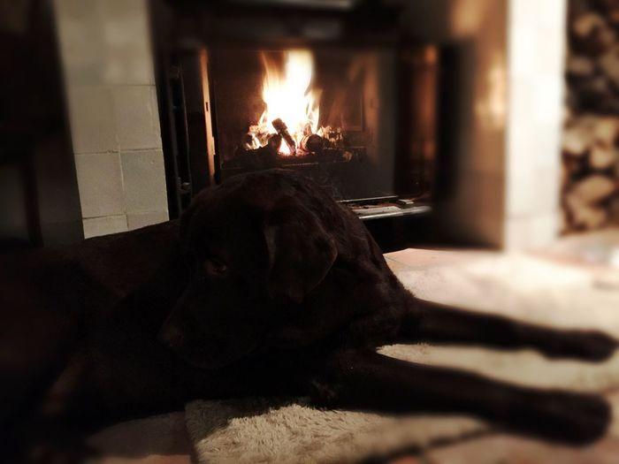 Pets Dog Flame Domestic Animals One Animal Burning AI Now!