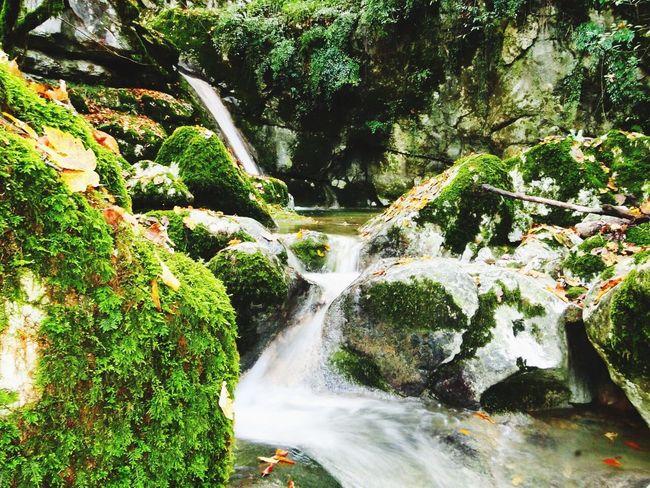 Photography Outdoor Landscape Landscape_Collection Landscapes Colors Jungle Enjoying Life Autumn Autumn Colors