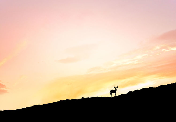 Low Angle View Of Silhouette Deer On Landscape Against Orange Sunset Sky